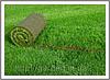 Рулонный газон от производителя. Продажа рулонного газона начнется после 25 апреля 2016 года!!!!!
