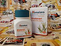 Шатавари Хималая, Shatavari Himalaya №60 - основное омолаживающее растение для женщин, фото 1