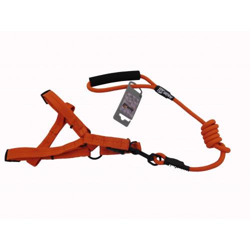 Комплект шлея с поводком AnimAll для животных, M, оранжевый