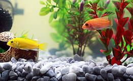 Корм для рыбок: как выбрать правильный?