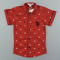 {есть:110 СМ,92 СМ,98 СМ} Рубашка для мальчиков,   Артикул: N3015 [92 СМ]