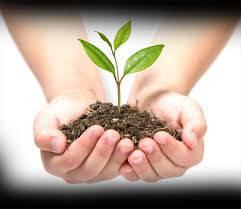 Средства защиты растений гербициды