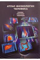 Атлас физиологии человека. Схемы. Таблицы.Рисунки. Малоштан Л.Н.. БУРУН и К.