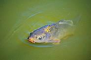 Рыбалка в летнее время на карпа