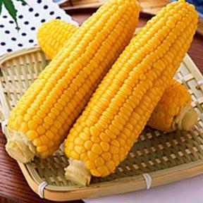Семена кукурузы Старшайн F1 100 000 сем. Сингента (Syngenta) - Интернет магазин капельного орошения «КАПЛЯ» в Одесской области