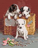 Картина за номерами Цуценятка в кошику 40х50 см