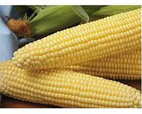 Семена кукурузы Шайнрок F1 100 000 сем. Сингента (Syngenta)