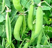 Горох овощной Скинадо 100 000 сем.Сингента (Syngenta)