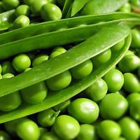 Горох овощной Сомервуд 100 000 сем.Сингента (Syngenta)