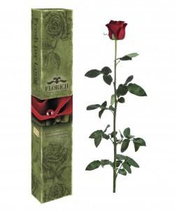 Одна долгосвежая роза FLORICH в подарочной упаковке. Заказать и купить цветы можно с доставкой.