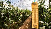 Захист тепличних рослин від високої температури