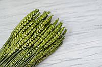 Сухоцвіт колосок зелений 1 шт