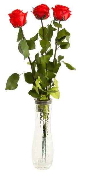 Долгосвежая роза FLORICH поштучно. Заказать и купить цветы можно с доставкой.