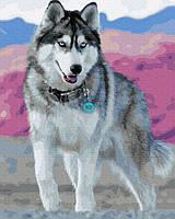 """Картина по номерам. Rainbow Art """"Голубоглазый хаски"""" GX30393-RA"""