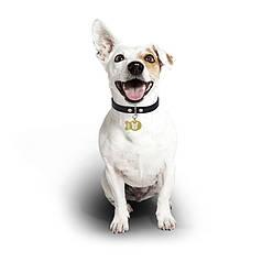 Медальйон-адресник на нашийник для домашніх тварин Manulife Риба Gold 3,8 * 2,5 * 0,2