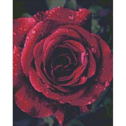 """Алмазная вышивка """"Роза с каплями росы"""" (роза, цветы, цветок)"""