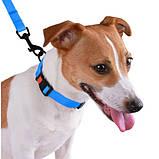 Ошейник ACTIVE для собак водоотталкивающий с защитным полимерным покрытием Голубой 16мм (25-33см ), фото 3
