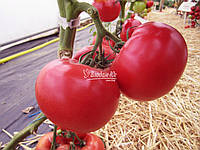 Семена томата Афен F1 Клоз 1000 Семян