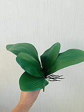 Декоративный лист орхидеи с корнем из латекса ( Maxi 33 см ), фото 2