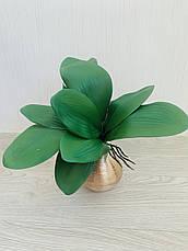 Декоративный лист орхидеи с корнем из латекса ( Maxi 33 см ), фото 3