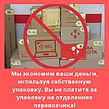 Кедр сибирский семена (20 штук) (сосна кедровая) для выращивания саженцев + инструкции + подарок, фото 9