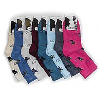 Женские носки Топ-Тап - 8,75 грн./пара (котики), фото 1