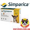 Таблетка Сімпаріка від бліх і кліщів для собак від 1,3 до 2,5 кг 1шт