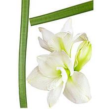 Декоративная наклейка Амарелиус 49x70 см