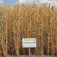 Пшеница Подолянка