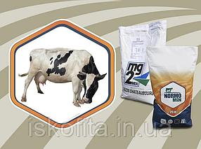 Премикс для сухостойных коров | Iskofita