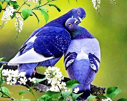 КДІ-0297 Набір алмазної вишивки Любов і голуби, фото 2