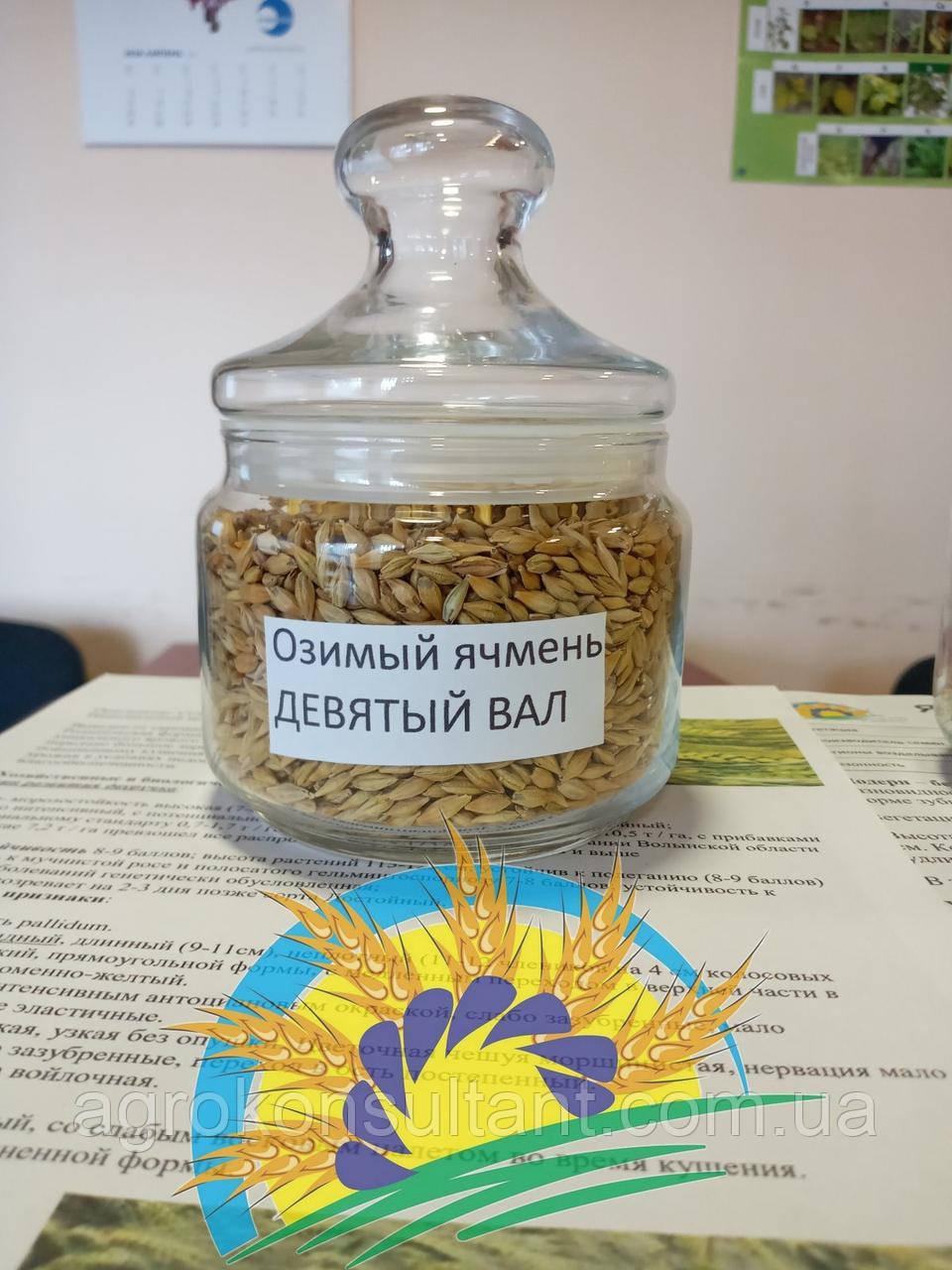Семена озимого ячменя 9-й вал (Девятый вал), элита 2020