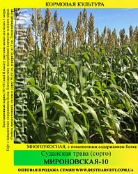 Семена суданской травы «Мироновская-10» 25 кг (мешок)