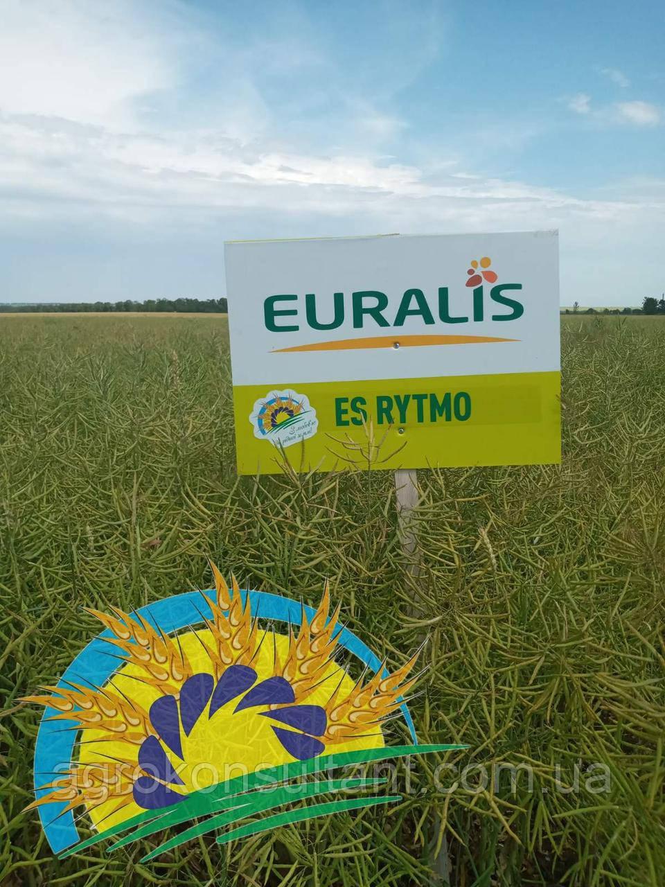 Семена озимого рапса ЕС Ритмо (среднераний гибрид) урожай 2019, Euralis