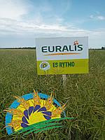 Семена озимого рапса ЕС Ритмо (среднераний гибрид) урожай 2019, Euralis, фото 1