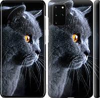 """Чехол на Samsung Galaxy S20 Plus Красивый кот """"3038c-1822-40392"""""""
