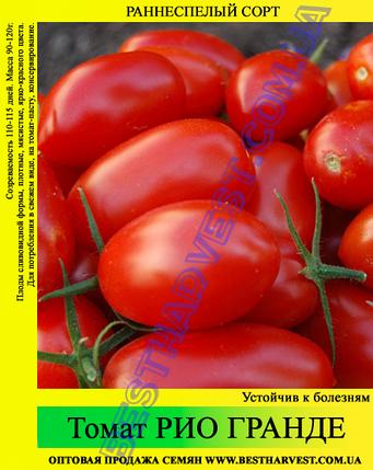 Семена томата Рио Гранде 0,5 кг, фото 2