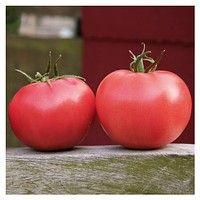 Афен Ф1 250  сем.ВЛАДАМ томат розовый