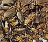 """Сублимированный мраморный таракан """"Просто добавь воды!"""" для рептилий, ежей, муравьев, птиц , грызунов"""