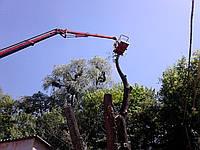 Спил деревьев Уборка участка (067) 232 81 77