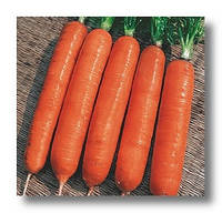 Семена моркови Навал F1 2,2-2,4 мм 1 000 000 сем. Бейо заден.