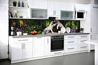 Тварини Фауна (кухонні фартухи)