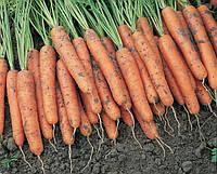 Семена моркови Ниагара F1 2,0-2,2 мм1 000 000 сем. Бейо заден.