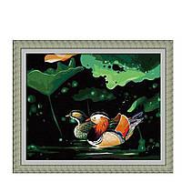 Картина Утки-мандаринки