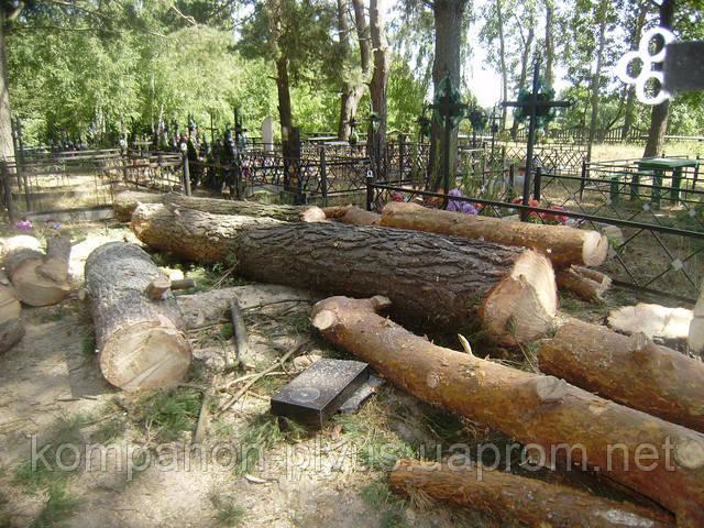 Видалення дерев на кладовищі