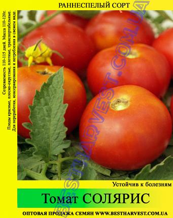 Семена томата Солярис 0.5 кг, фото 2
