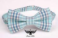 Бабочка голубая шотландка, фото 1