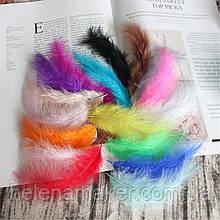 Яркие цветные перья 10-15 см 10 шт.
