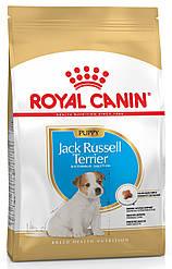 Корм Royal Canin Jack Russell Puppy для щенков породы джек-рассел-терьер 1,5 кг