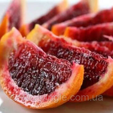 """Апельсин кровавый """"Сангвинелло"""" (C. sinensis """"Sanguinello"""") 20-25 см. Комнатный"""